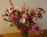 Heritage Pinks (Dianthus)