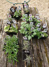 Mail Order Plants