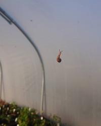 Slug Acrobatics
