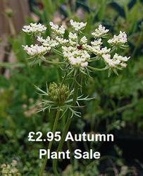 Autumn £2.95 Plant Sale