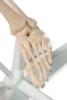 Value Standard Human Skeleton - foot