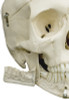 Rudiger Standard Human Skeleton