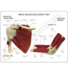 Mini Muscled Joint Set - Education card for shoulder and elbow