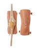 Arthroscopy Model of the Knee-Joint