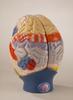 0172-00  Giant Functional Center Brain