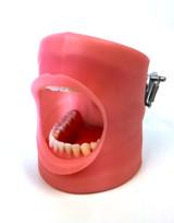 Nissin/Kilgore Oral Cavity Cover for typodont model