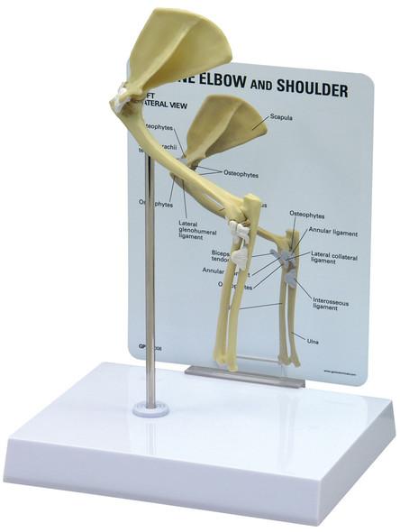 Feline Elbow / Shoulder