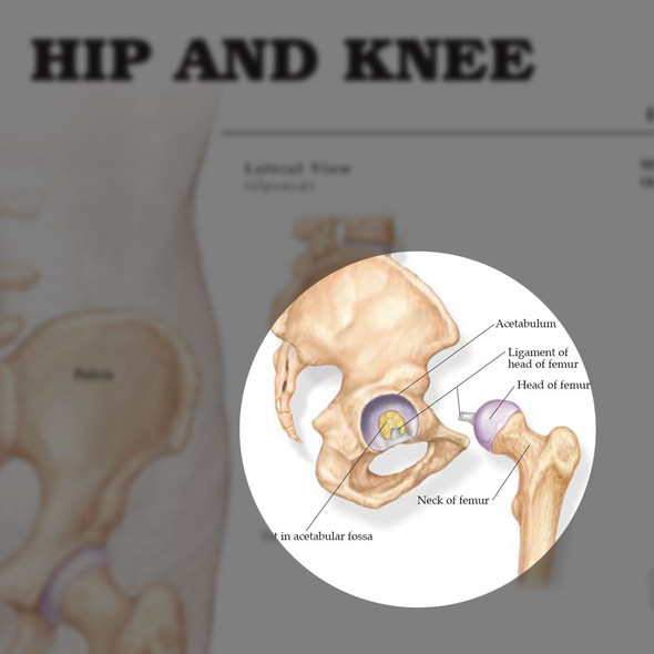 Hip & Knee - highlight