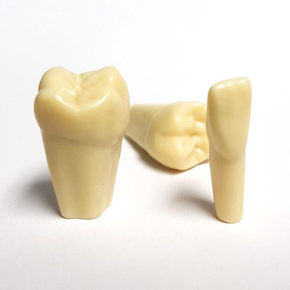 Replacement Frasaco Teeth - ANA4