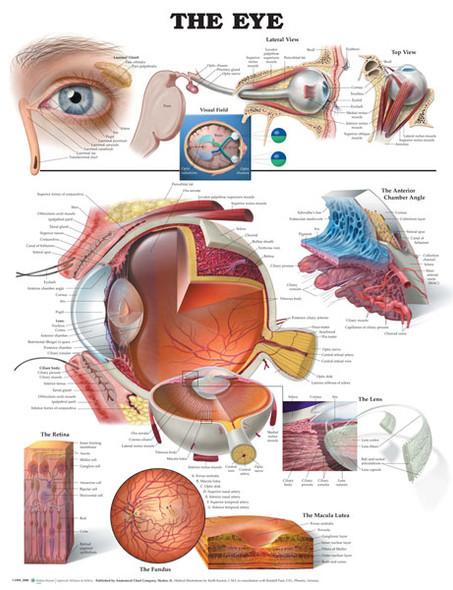 The Eye 1