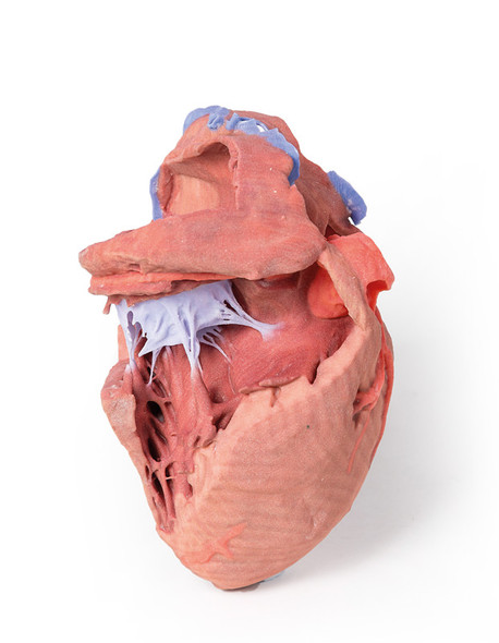 Heart internal structures - 3D Printed Cadaver