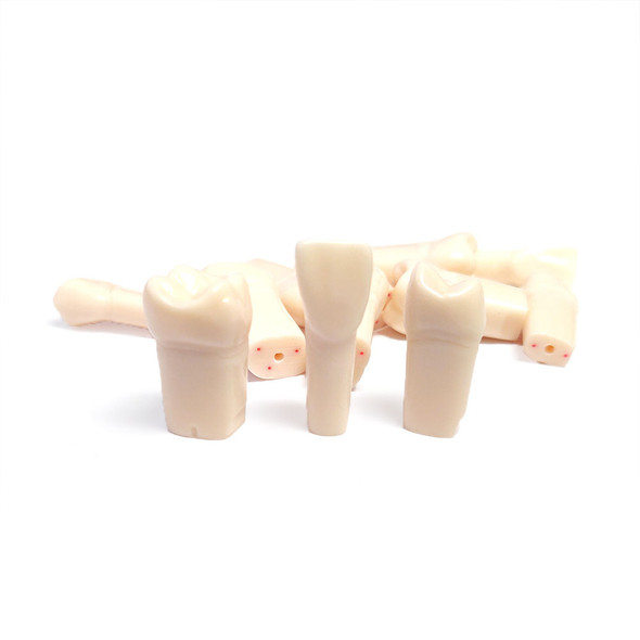 Nissin Permanent Teeth with Dental Pulp - A12A-200