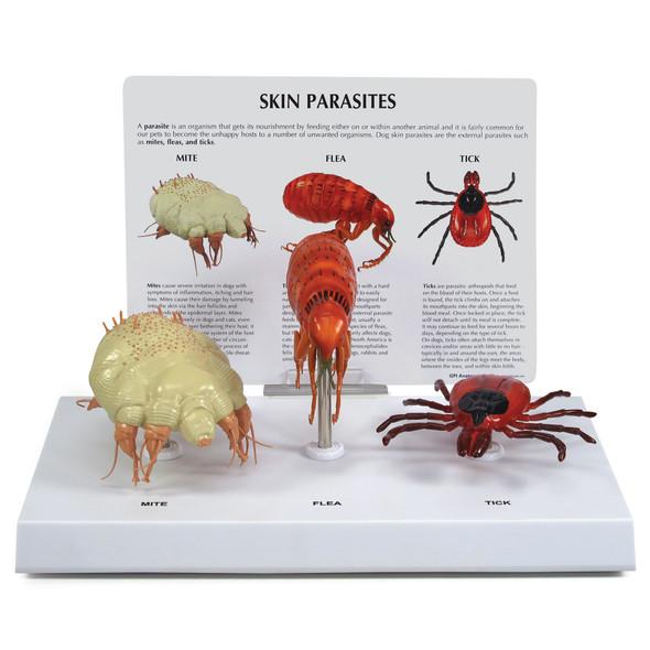 Canine Parasites