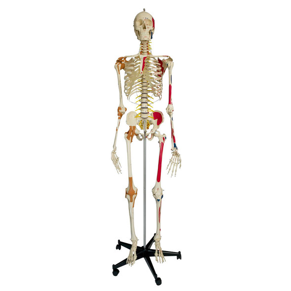 Rudiger Super Skeleton