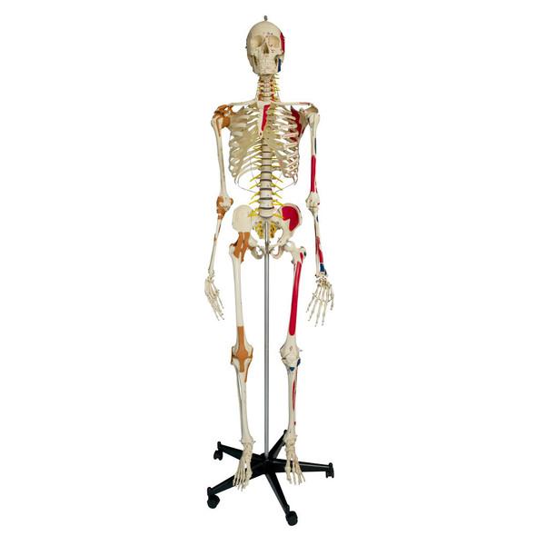 Rudiger Super Skeleton
