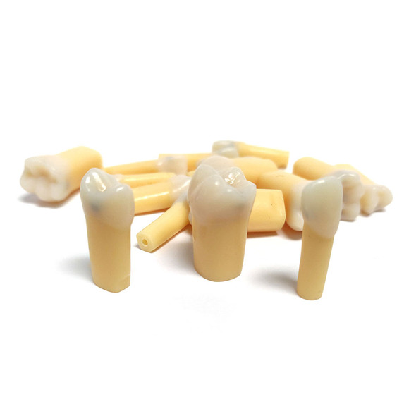 Composite Resin Teeth with Caries -  A27A Kilgore/Nissin