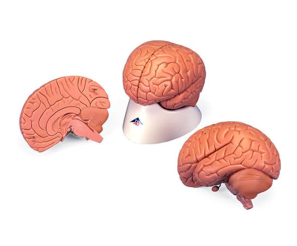 Economy Brain, 2-parts