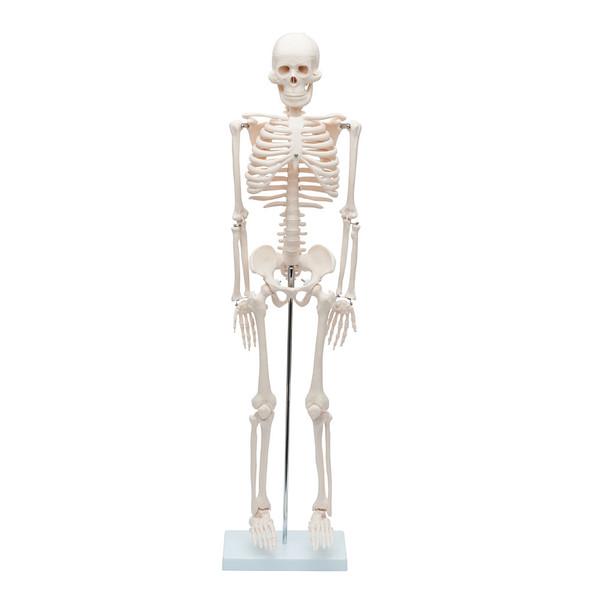 Value Miniature Human Skeleton