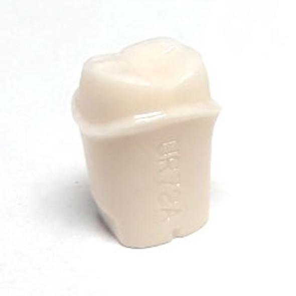 Preprepared Tooth - 1.7 (#2) Crown Prep - UR72A 1