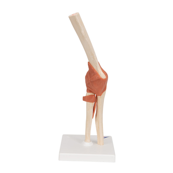 Deluxe Functional Elbow Joint | 3B Scientific A83/1