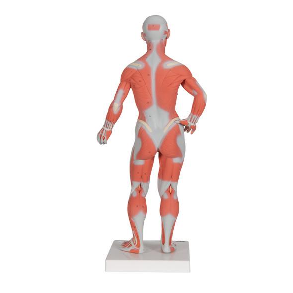 Mini Muscular Figure, 2 parts