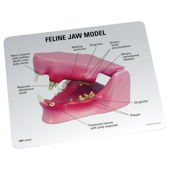 Feline Jaw