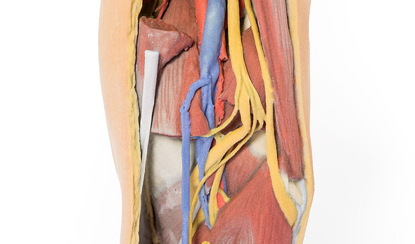Popliteal Fossa distal thigh and proximal leg