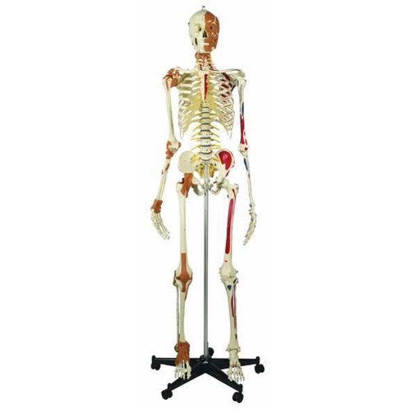"""Rudiger """"Best of"""" Super Skeleton"""