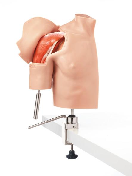 Arthroscopy Model of Shoulder Joint Complex