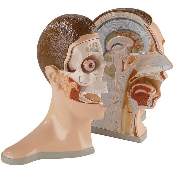 0176-00  Five-Part Bisected Head