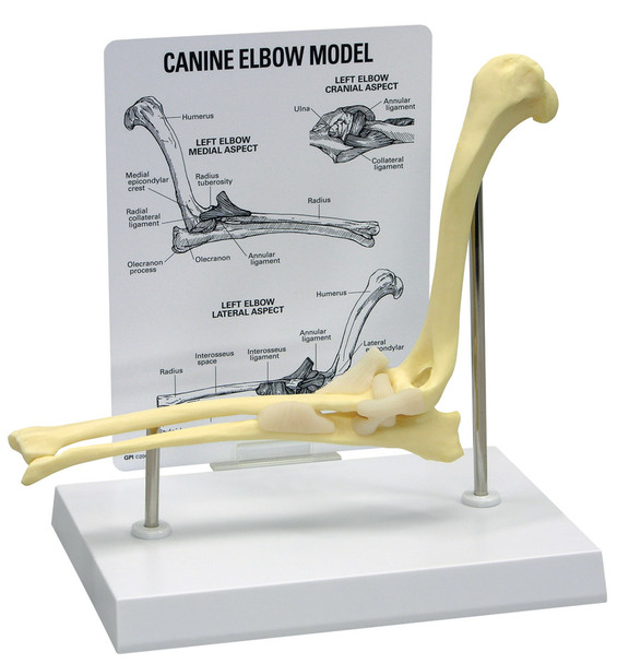Canine Elbow