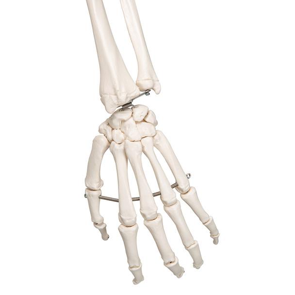 Stan - Standard Skeleton Model - hand