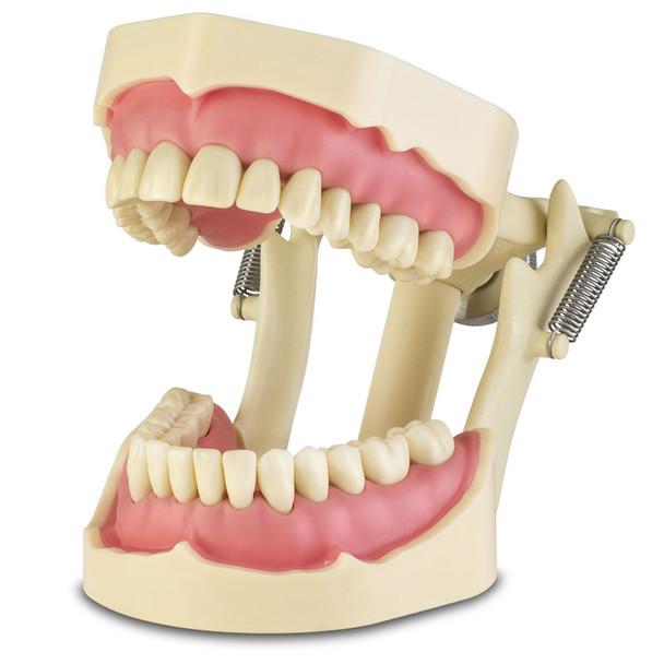 Frasaco Standard ANA-4 Typodont - 28 Tooth model