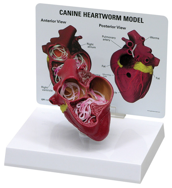Canine Heartworm - Discontinued