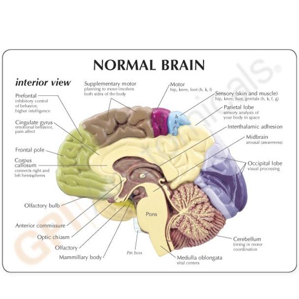 Sensory/Motor Brain reference card - back