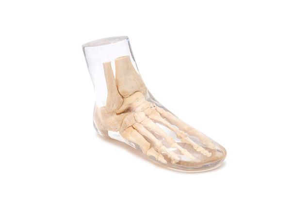 X-Ray Phantom Foot, transparent