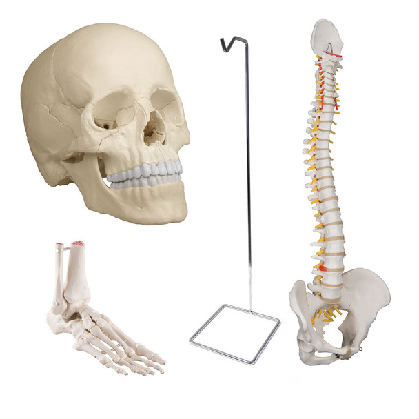 Osteopathic Bundle with Standard Flexible Spine