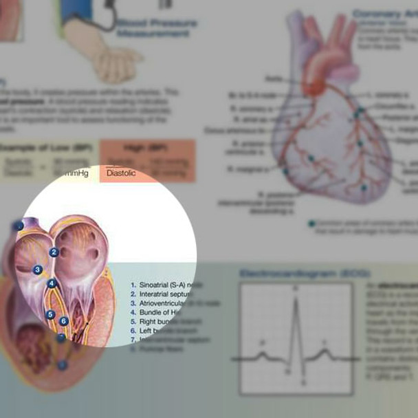 The Heart chart, detail