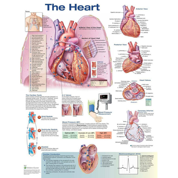 "The Heart chart, 20"" x 26"""