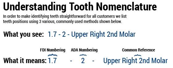 Understanding Tooth Nomenclature
