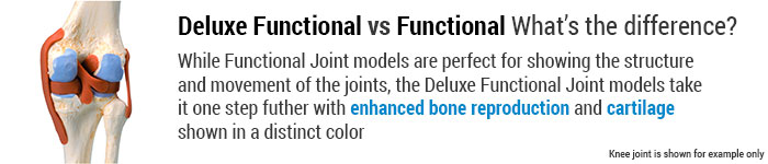Deluxe Functional Joint Comparison