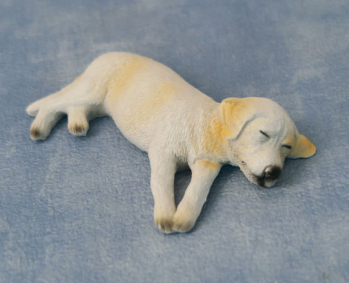 Ben the sleeping Labrador Dog 5556