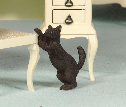 Playful Poppy, the Cat 2916