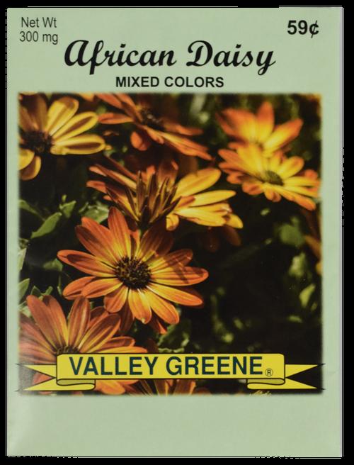 Bulk African Daisy Seeds - 25, 50, 100 Packs - Great for Creating Your Dream Garden