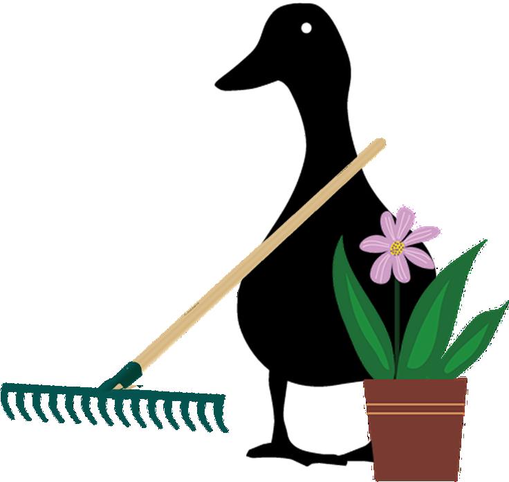 duck-garden.png
