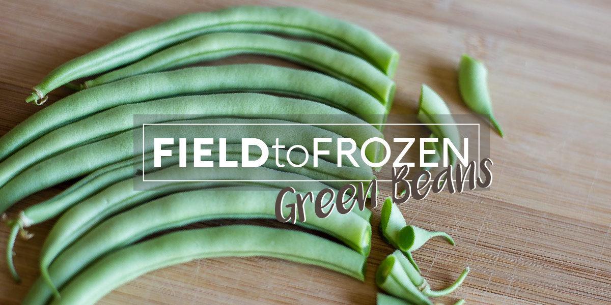 Field to Frozen: Green Beans for Days     or Years! - Avid Armor