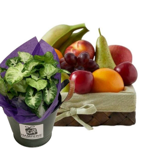Fruit Gift Basket + Indoor Plant