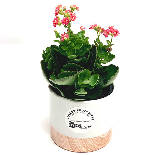 Plant Gifts Online