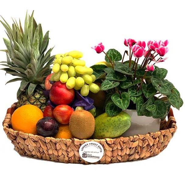 Fruit Basket Plant Gift - Cyclamen Hampers