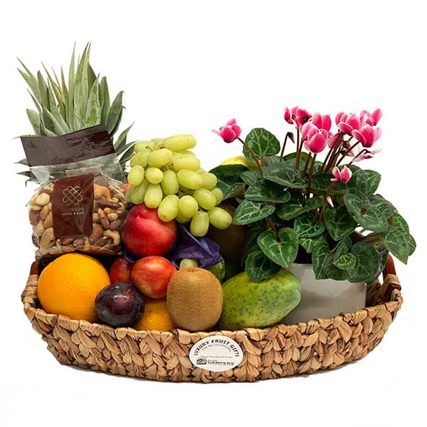 Gift Hamper + Plant with Mixed Nuts